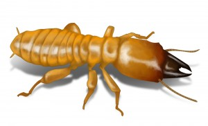 dampwood-termite-illustration_1000x608